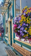 15th Aug 2020 - Flowers in Crested Butte