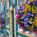 Flowers in Crested Butte by harbie