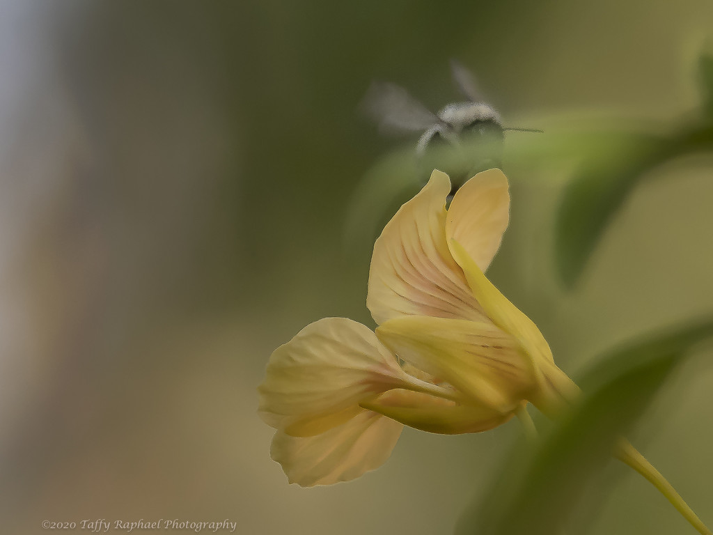 Stealth Pollinator by taffy