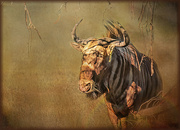 16th Aug 2020 - Gnu on the rampage
