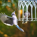Spread Your Wings by gardencat