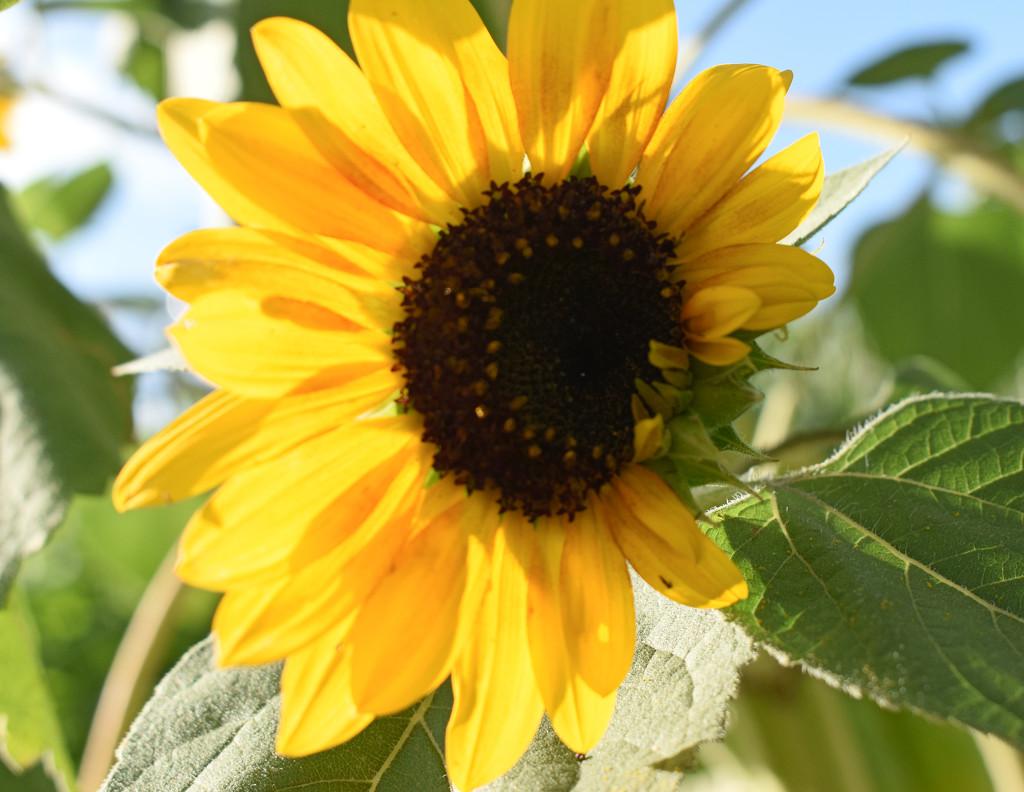 Sunshiny Yellow by bjywamer
