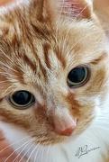 16th Aug 2020 - Mr. Kitty