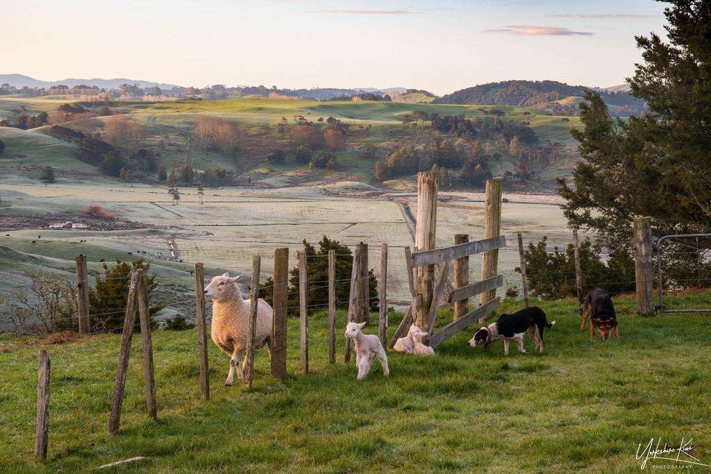 Frosty Morning on the Farm by yorkshirekiwi
