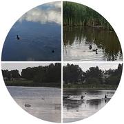 16th Aug 2020 - The Lake
