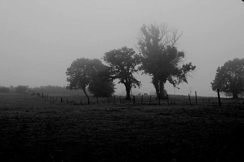 Misty Morning 2 by allsop