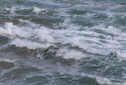 17th Aug 2020 - Surfing seal