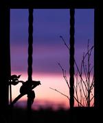 16th Aug 2020 - Loo Sunset!