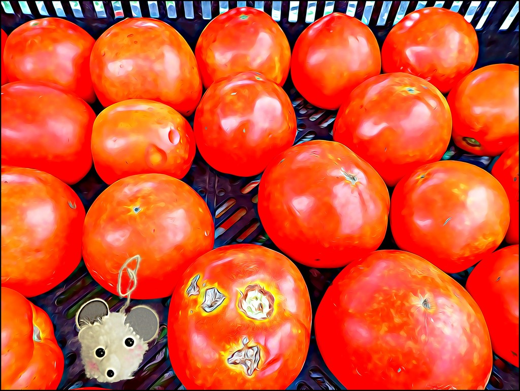 Millie Shops for Tomatoes by olivetreeann