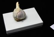 17th Aug 2020 - garlic à la olivia parker