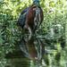 Green Heron  by marylandgirl58