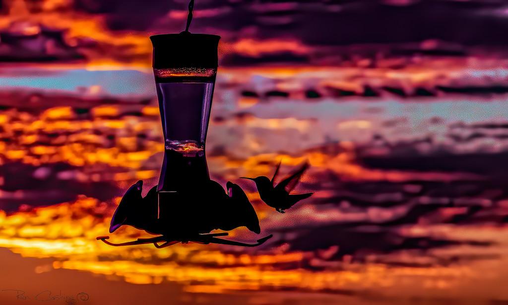 Hummingbird at Sunset by stray_shooter