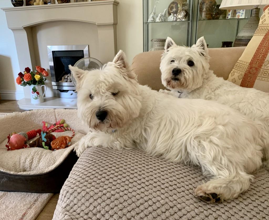 Best friends - definitely not!  by pamknowler