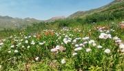 18th Aug 2020 - Wildflowers II (Aster)