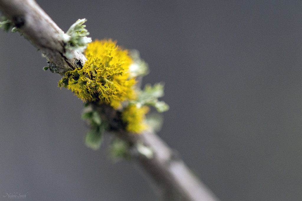 Lichen by nickspicsnz