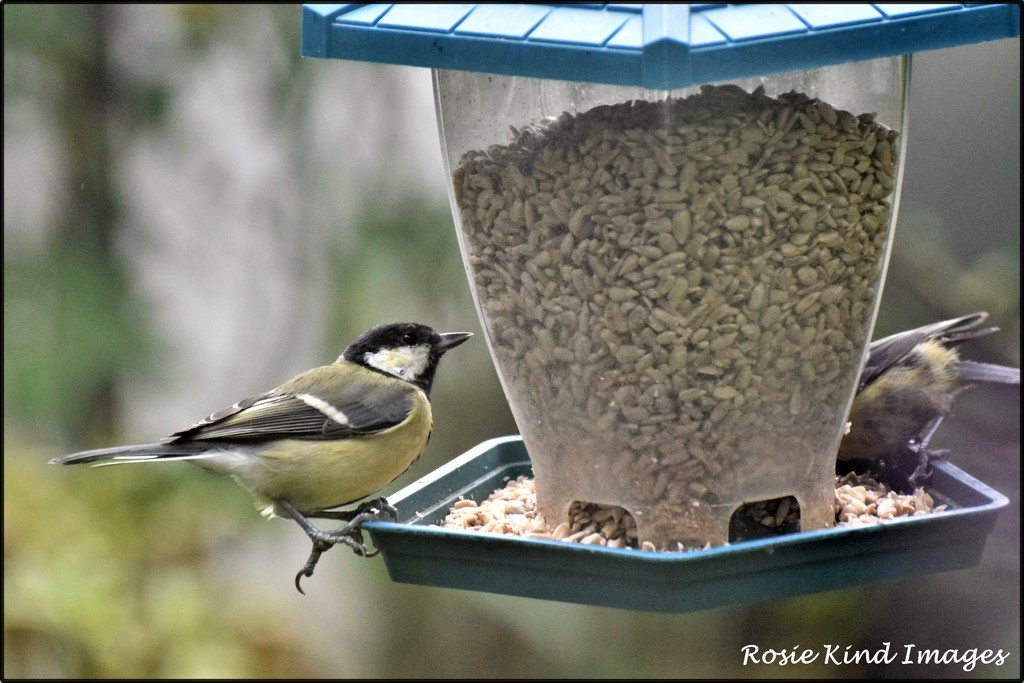 Busy at the feeder by rosiekind