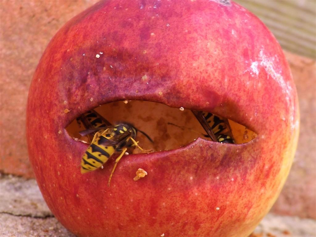 Apple Corers by ajisaac