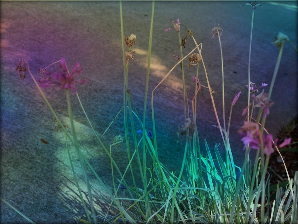 World Photography Day Flowering weeds macro by kathyboyles