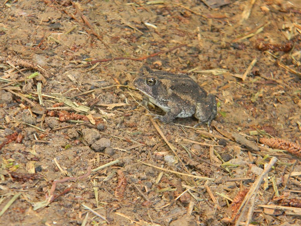 Toad by sfeldphotos