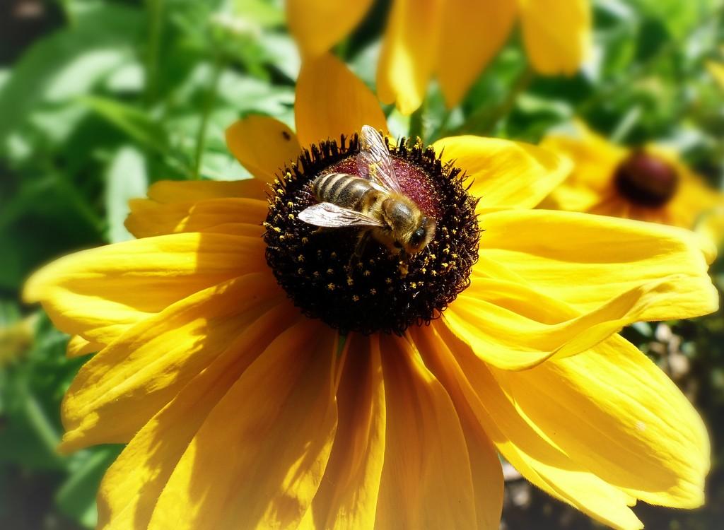 Leafcutter bee. by judithdeacon