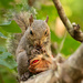 Squirrel Having It's Midday Snack! by rickster549