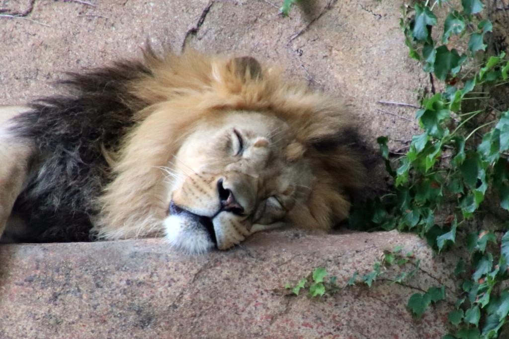The King Asleep by randy23