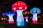 20th Aug 2020 - Glow in the dark Mushrooms