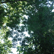 20th Aug 2020 - T for Tree