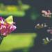 butterfly fluke by pistache