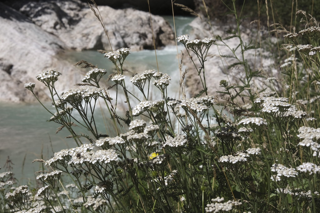 Flowers by the riverside by caterina