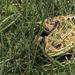 A Frog's Tale by taffy