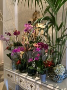21st Aug 2020 - Orchids display.