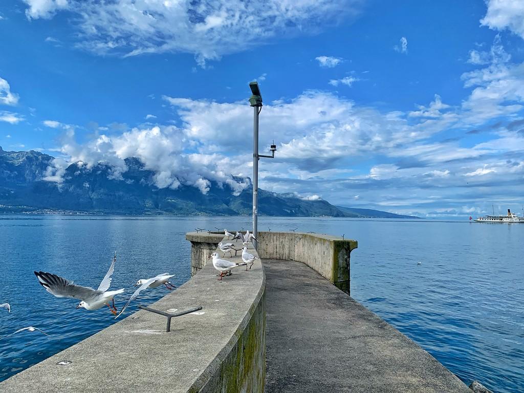 Seagulls flight.  by cocobella