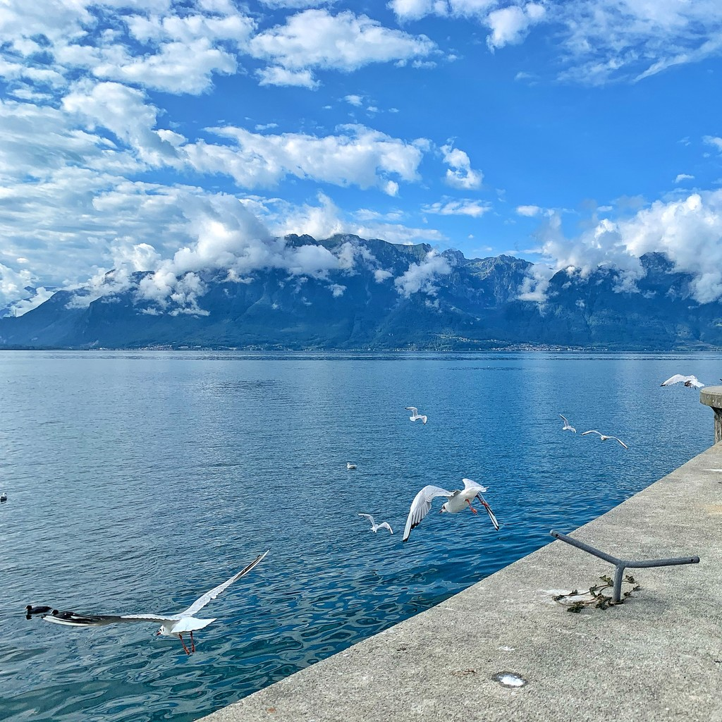 Seagull  by cocobella