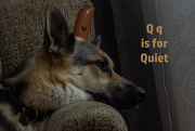 17th Aug 2020 - August Alphabet Month -  Quiet