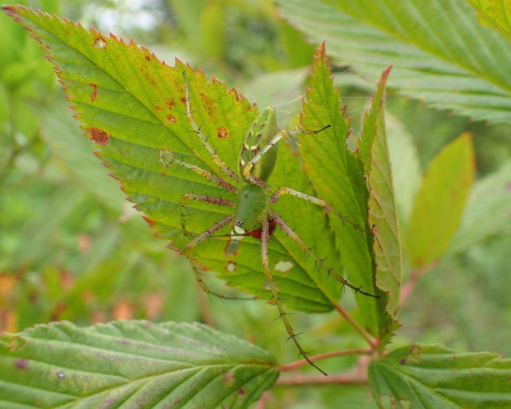 Not The Ladybug! by cjwhite