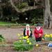 Daffodil tribute to mum