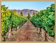 21st Aug 2020 - Vineyard View
