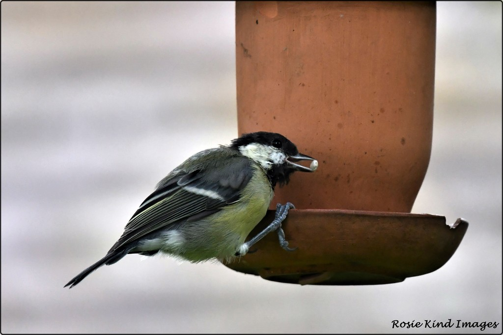 He has realised that I've just filled up the feeder by rosiekind