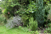 21st Aug 2020 - Shrubs and Trees