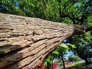 21st Aug 2020 - Wonky tree