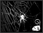 21st Aug 2020 - Millie the Magnificent Explores a Spider Web in the Dark of Night