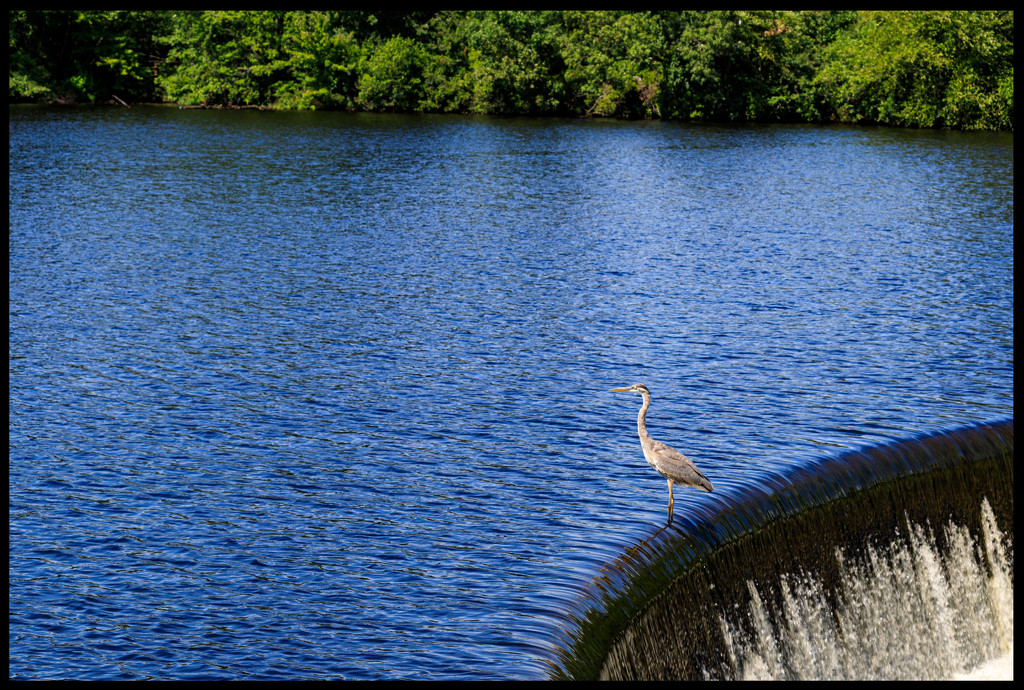 Looking for Fish by hjbenson