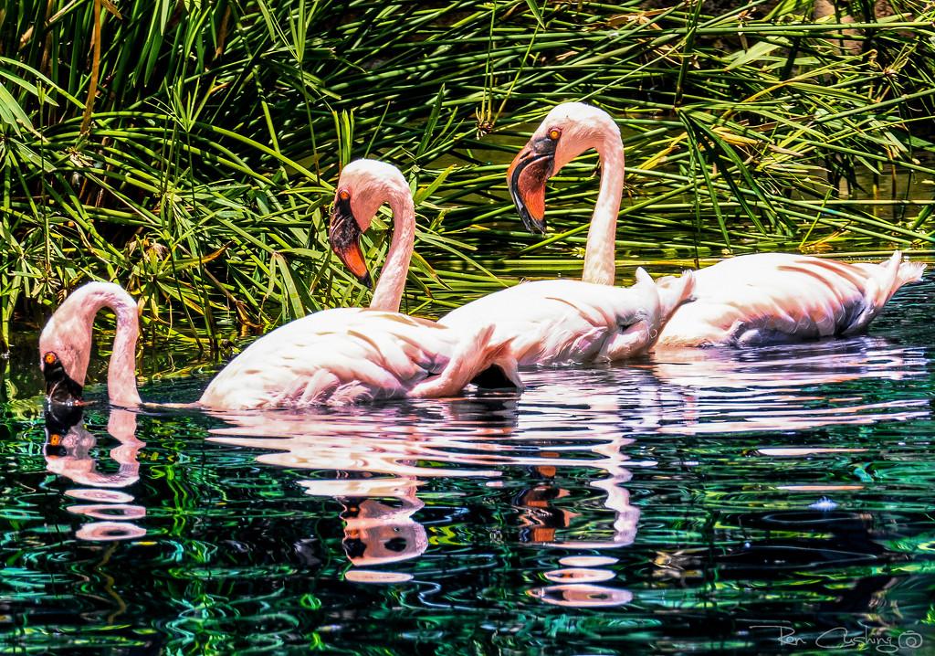 Flamingo Friday '20 23 by stray_shooter