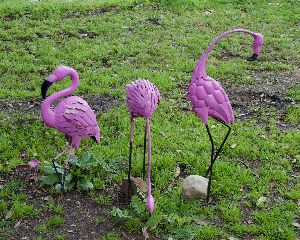 I Found Some Flamingos On Friday DSC_0595 by merrelyn