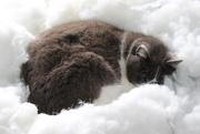 22nd Aug 2020 - Jack sleeping in snow!