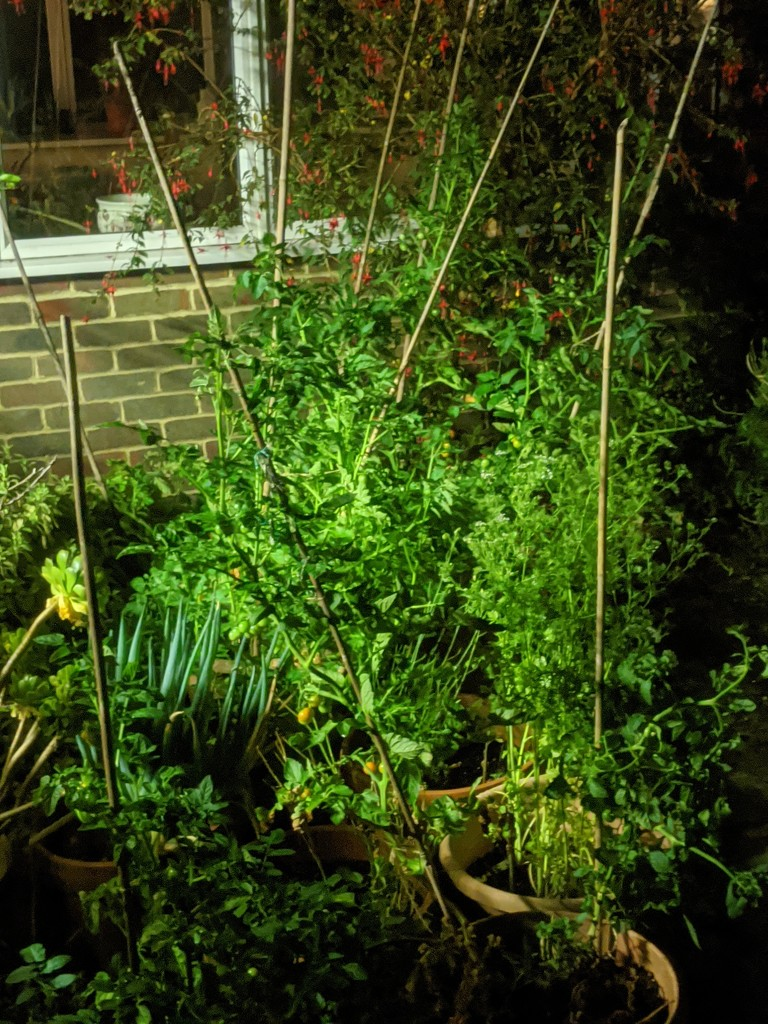 Tomatoes at night by stephenbyrne79