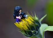 22nd Aug 2020 - Taking Advantage Of The Unseasonal Sunflowers DSC_3094