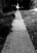 22nd Aug 2020 - The Path