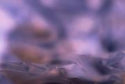 20th Aug 2020 - purple